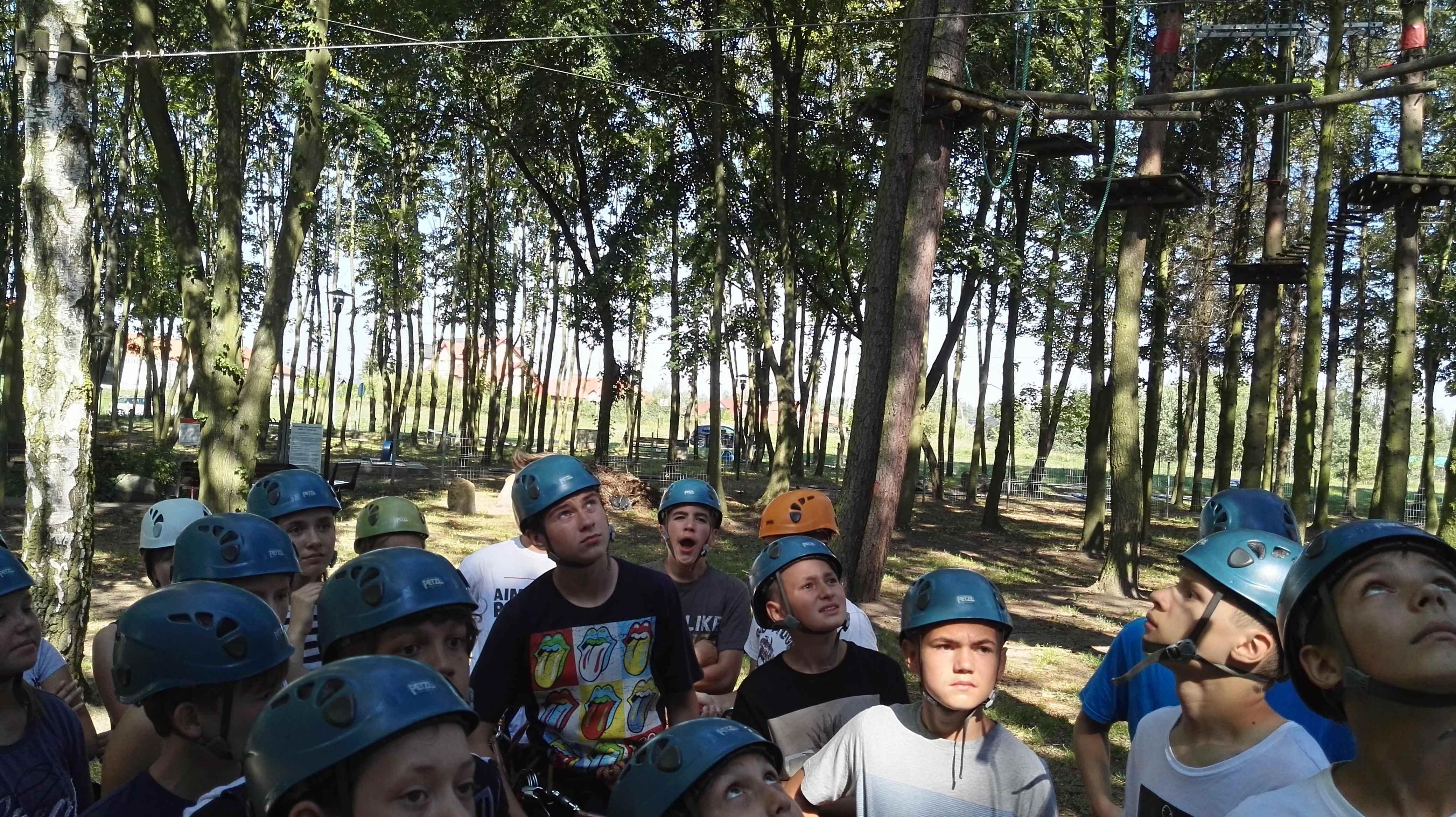 liny w lesie